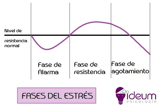 fases estres